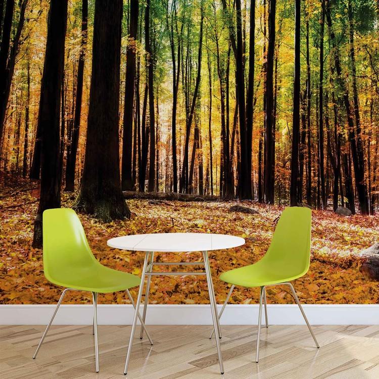 Forest Woods Wallpaper Mural