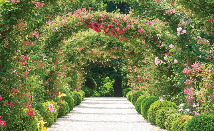 Garden Path Nature Wallpaper Mural