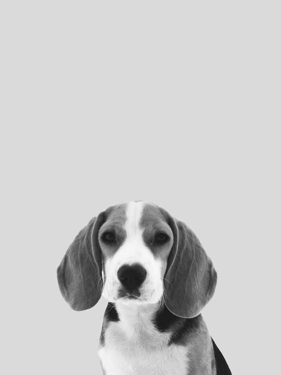 Grey dog Wallpaper Mural
