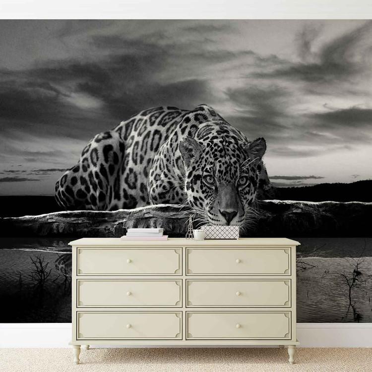 Leopard Feline Reflection Black Wallpaper Mural