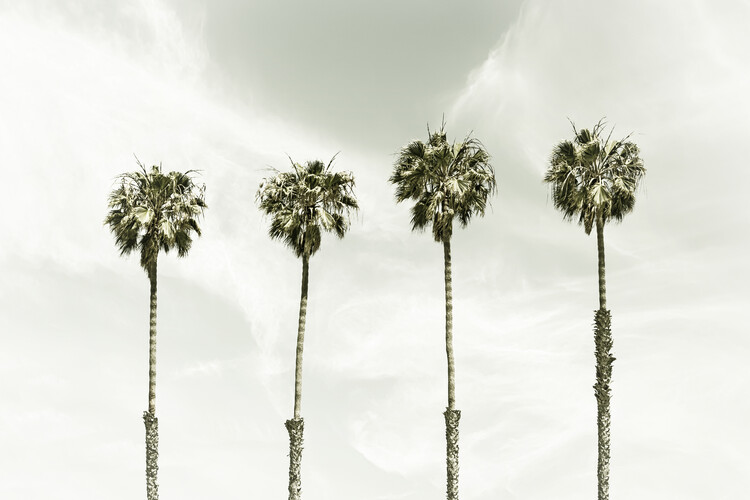 Minimalist Palm Trees | Vintage Wallpaper Mural