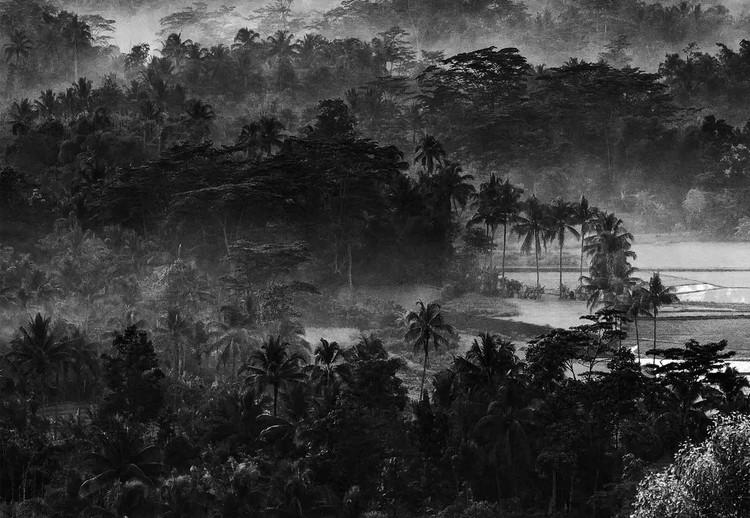 Mist In The Morning Wallpaper Mural