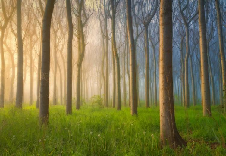 Misty Morning Wallpaper Mural