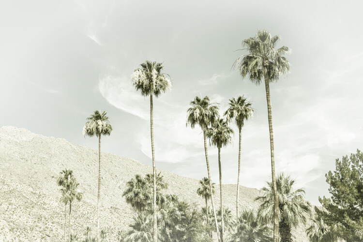 Palm Trees in the desert | Vintage Wallpaper Mural