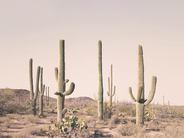 Wallpaper Mural Pastel Cactus Desert