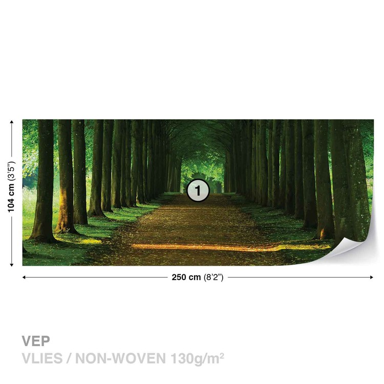 Path Trees Forest Nature Wallpaper Mural