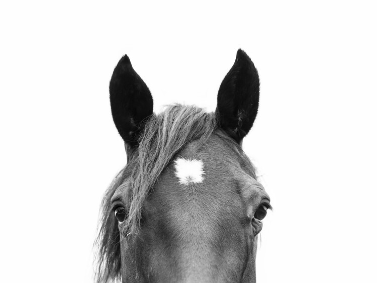Wallpaper Mural Peeking Horse