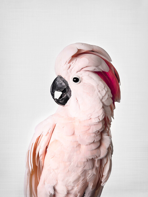 Wallpaper Mural Pink Cockatoo