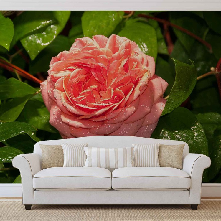 Pink Rose Wallpaper Mural