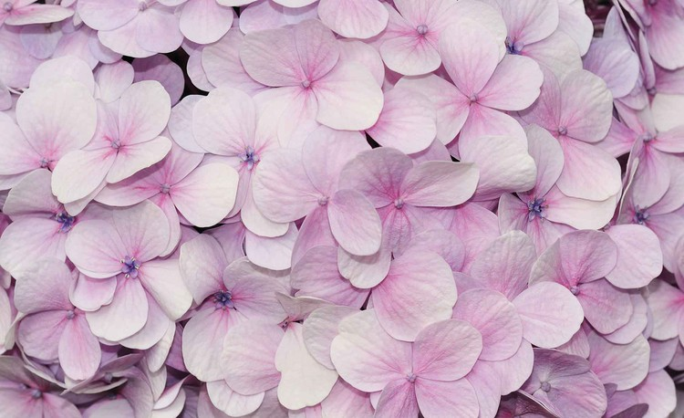 Purple Flowers Floral Design Wallpaper Mural