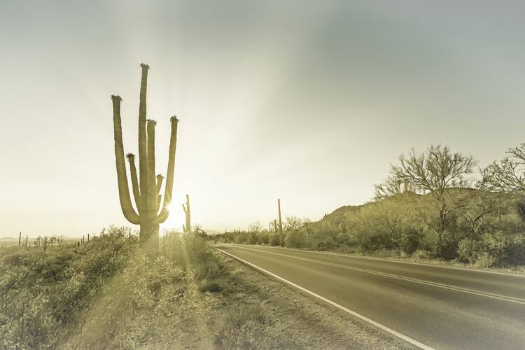 SAGUARO NATIONAL PARK Setting Sun | Vintage Wallpaper Mural