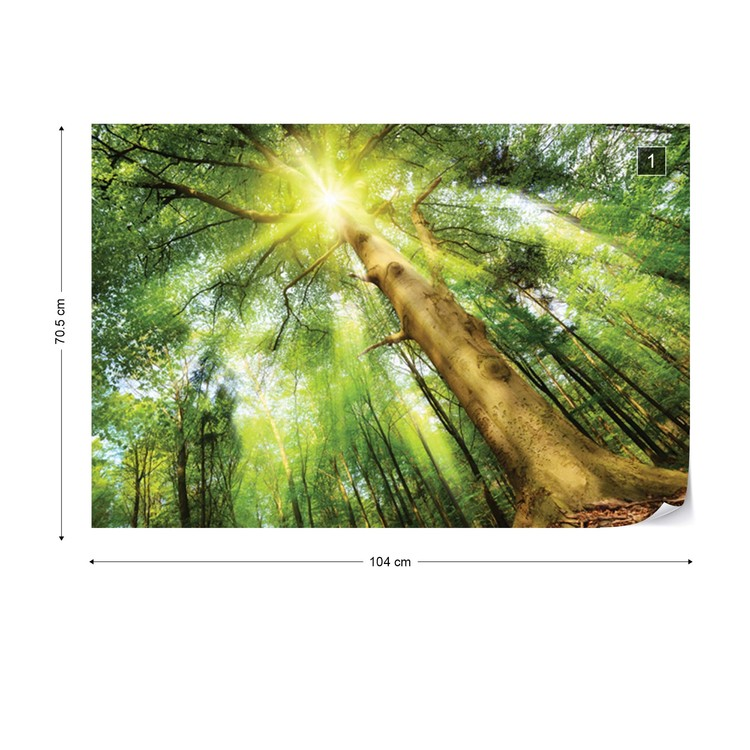 Sunshine Trees In The Forest Wall Paper Mural Buy At Europosters