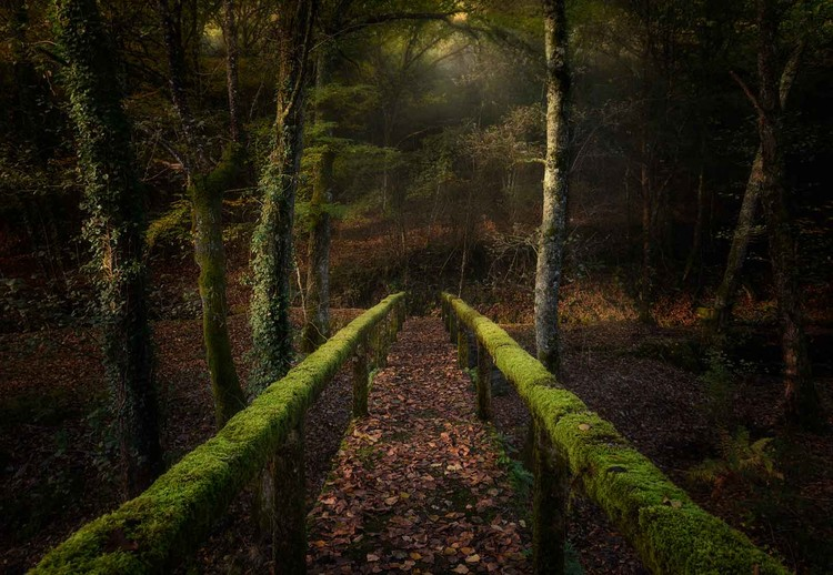 The Way To The Forest Wall Paper Mural Buy At Europosters