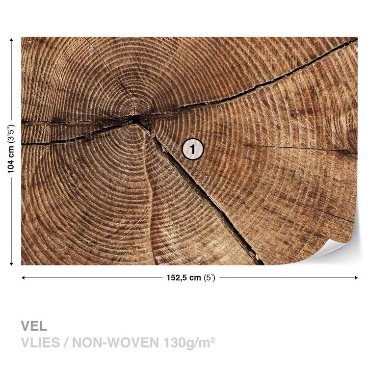 Tree Stump Rings Wallpaper Mural