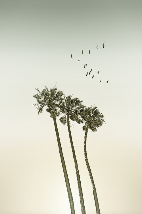 Vintage palm trees at sunset Wallpaper Mural