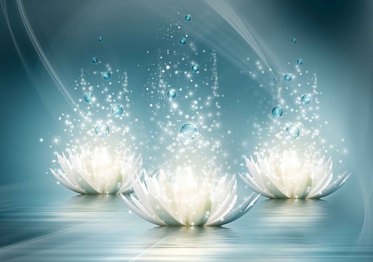 White Lotus Flowers Drops Wallpaper Mural