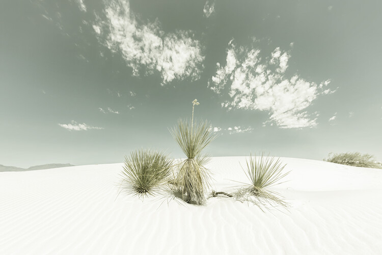White Sands Vintage Wallpaper Mural