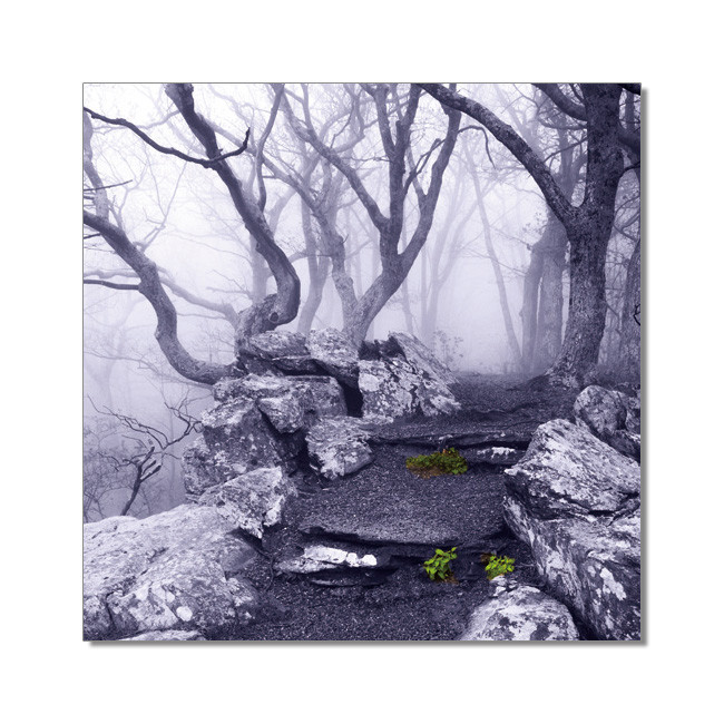 World is not Black and White - Appalachian Trail, Virginia Tableau Multi-Toiles